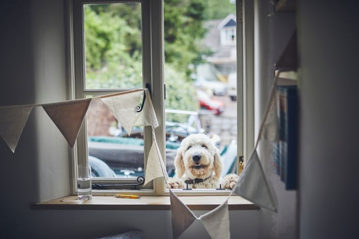 sheep dog looking through window sill before wedding